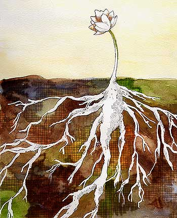 illustration friday: roots